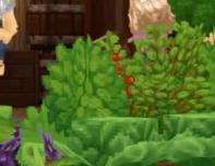 Buisson de baies ou tomates